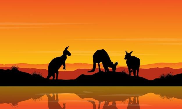 Landschaftskänguru auf der flussschattenbild