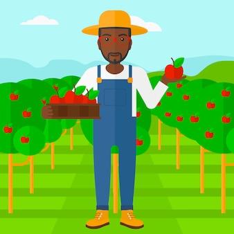 Landwirt, der äpfel sammelt.