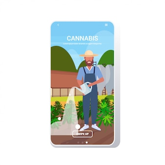 Landwirt, der cannabis industrielle hanfplantage wässert, die marihuana-banner anbaut