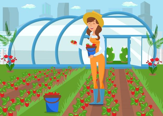 Landwirt, der erdbeere erntet