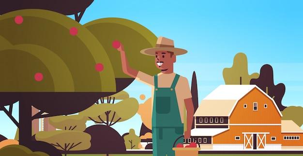 Landwirt, der reife äpfel vom afroamerikanermann des baumes pflückt, der früchte im flachen horizontalen porträt des gartenerntezeitkonzept-landschaftshintergrunds sammelt