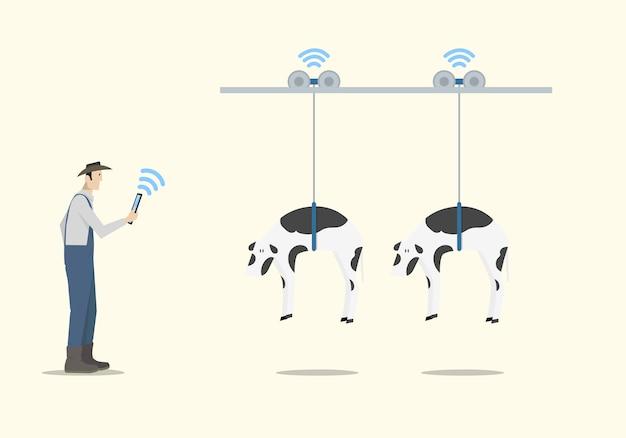 Landwirt, der tablette verwendet, um die automatische handhabung der kühe zu steuern