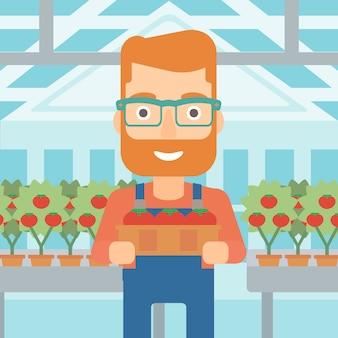 Landwirt, der tomaten sammelt