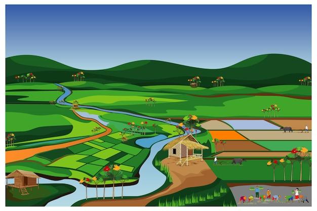 Landwirt transplantation reis aussaat im reisfeld vektor-design