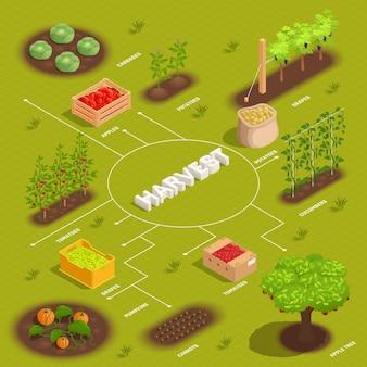Landwirtschaftliche ernte isometrische flussdiagrammillustration