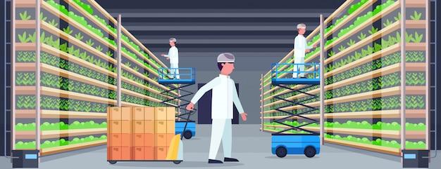 Landwirtschaftsingenieure arbeiten in modernen organischen vertikalen bauernhof innenlandwirtschaft system konzept palette lkw schere lift plattformen ausrüstung grüne pflanzen wachsende industrie horizontal