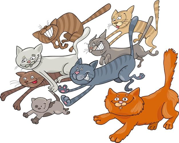Laufende katzen