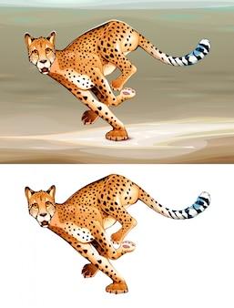 Laufender gepard in der savanne