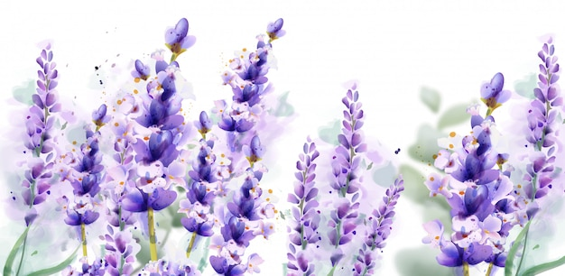 Lavendel aquarell hintergrund banner