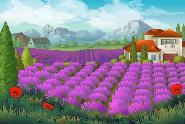 Lavendel blumenfeld. naturlandschaft, hintergrund