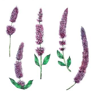 Lavendel-hand geschmerzt in der aquarellansammlung