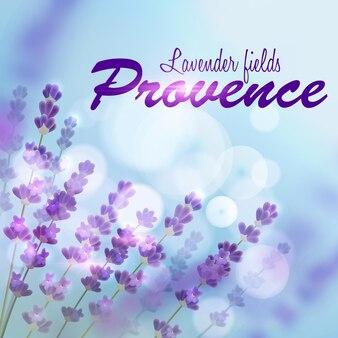 Lavendel hintergrund. provence felder des blühenden lavendels auf hintergrund des blauen unscharfen sonnenlichts Premium Vektoren