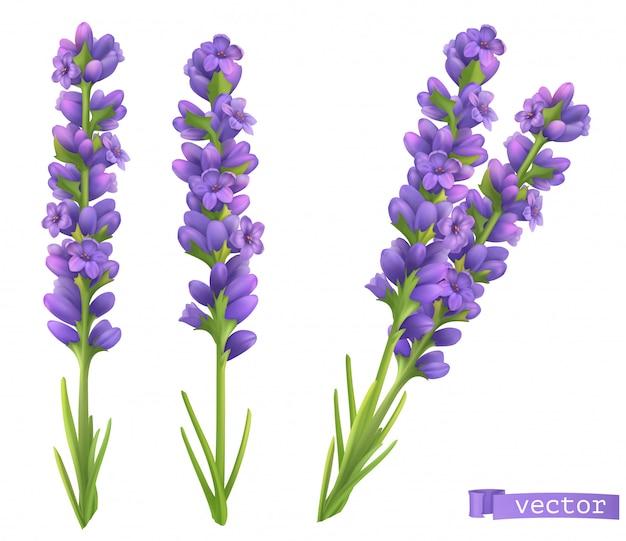 Lavendelblüten. 3d realistischer satz