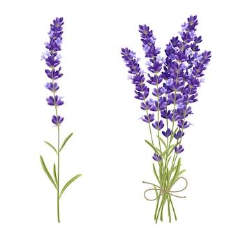 Lavendelblumenstrauß realistische abbildung