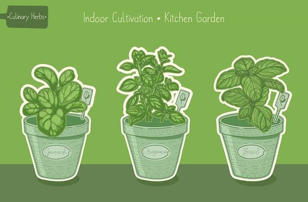 Lebensmittel grüne pflanzen für gemüsegarten
