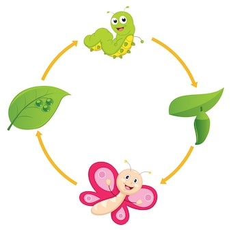 Lebenszyklus von butterfly