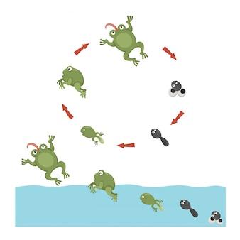 Lebenszyklus von frosch