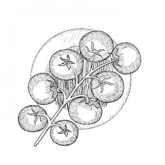 Leckere tomate in zeichnung isoliert symbol