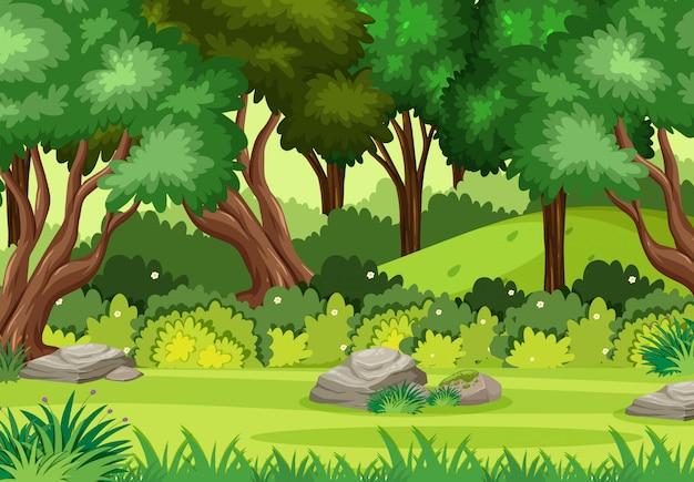 Leere naturszenen mit grünen bäumen im wald