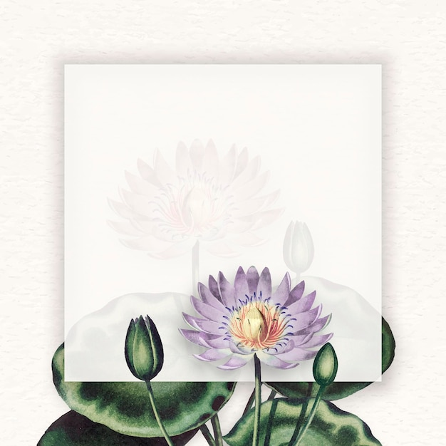 Leerer lila seerosenrahmen