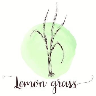 Lemongrass-skizze hand gezeichnete illustration des zitronengrastees