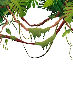 Liane und reben wickeln zweige mit tropischen blättern. tropische kletterpflanzen im dschungel