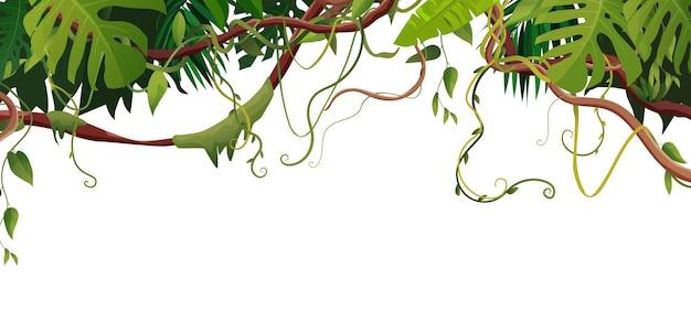 Lianen- oder weinrebenzweige mit tropischen blättern. tropische kletterpflanzen im dschungel
