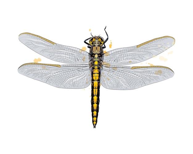 Libelle aus einem spritzer aquarell, farbige zeichnung, realistisch.