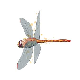 Libelle aus einem spritzer aquarell, farbige zeichnung.