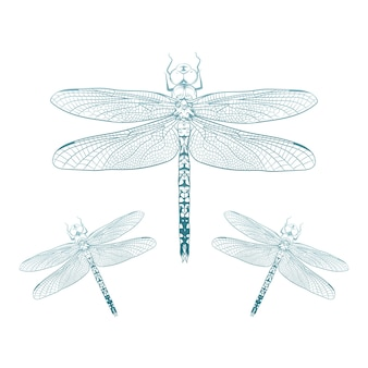 Libelle icon design Premium Vektoren