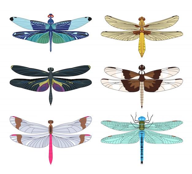 Libellenikonen stellten im flachen stil lokalisiert auf weißem hintergrund ein.