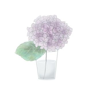 Lila hortensien in einer vase. auf weißem hintergrund.