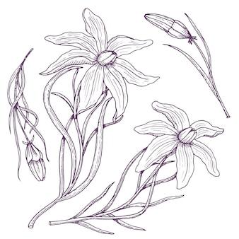 Lilie mit blättern und knospen. hochzeitsblumen im garten oder in der frühlingspflanze.