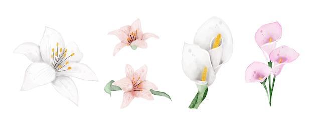 Lilienblüten-aquarell