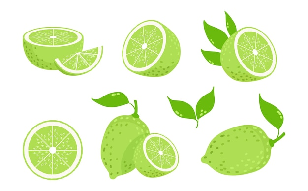 Limettenfrüchte. zitrusscheiben, isolierte grüne zitronen. frische vitamin c-vektor-illustration. zitruszitrone, reifer limettensaft, fruchtnahrung