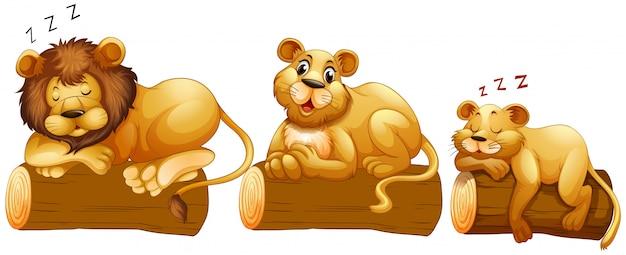 Lion familie auf dem baumstamm