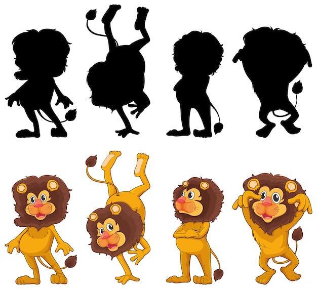 Löwe mit seiner silhouette