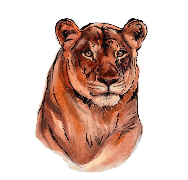 Löwenillustration