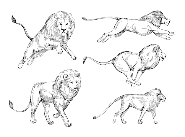 Löwenskizze. hand gezeichnete illustration lokalisiert auf weiß