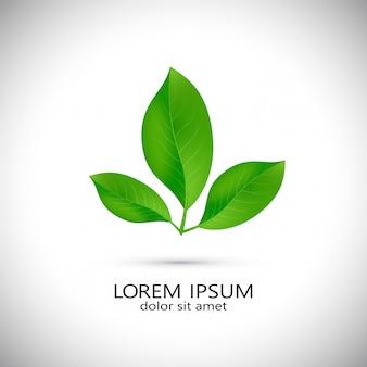 Logos des grünen baumblattökologie-naturelementvektors.