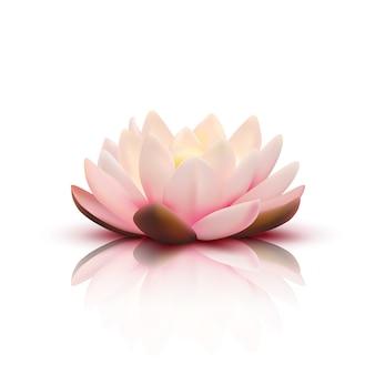 Lokalisierte blume des lotos mit den hellrosa blumenblättern mit reflexion auf weißer vektorillustration des hintergrundes 3d