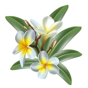 Lokalisierte exotische frangipaniblume und -blätter der ikone auf transparentem gitterhintergrund
