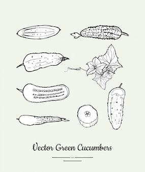 Lokalisierter lebensmittelgeschäft-vektorsatz der gurken gemüse