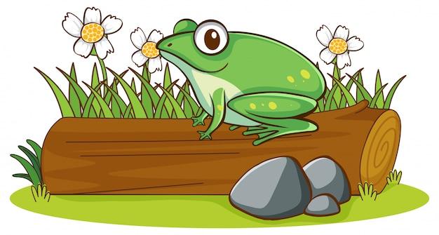 Lokalisiertes bild des frosches auf klotz