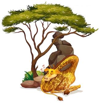 Lokalisiertes bild des giraffenschlafens