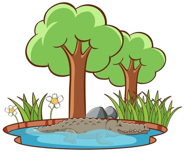 Lokalisiertes bild des krokodils im wasser