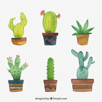 Lovely pack von aquarell kaktus