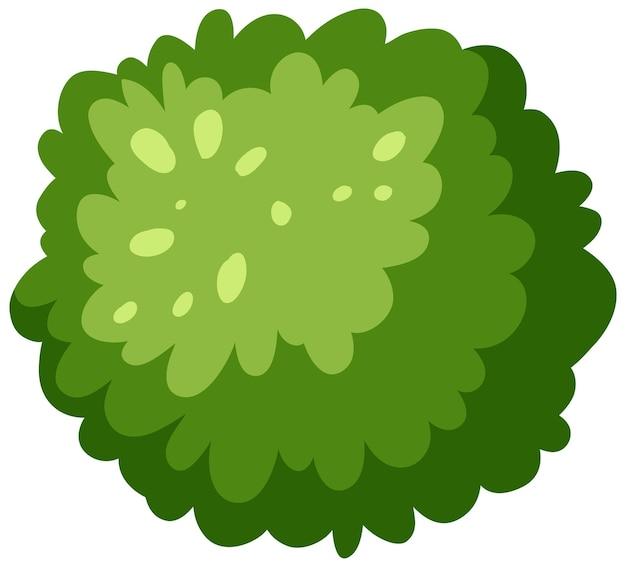 Luftaufnahme eines grünen busches auf weißem hintergrund