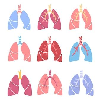 Lungenanatomie, erkrankungen der atemwege. diagnose von tuberkulose, lungenentzündung und asthma.