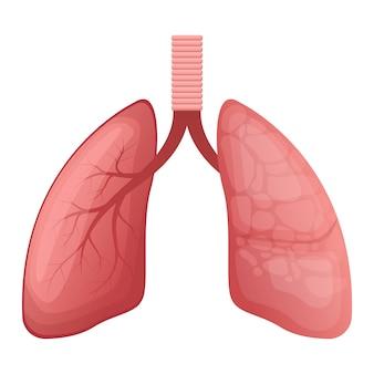 Lungenillustration auf weißem hintergrund